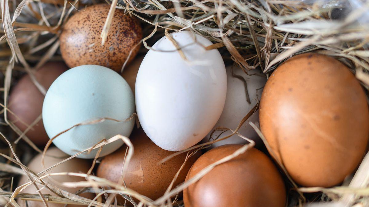 Eier verschiedener Färbung