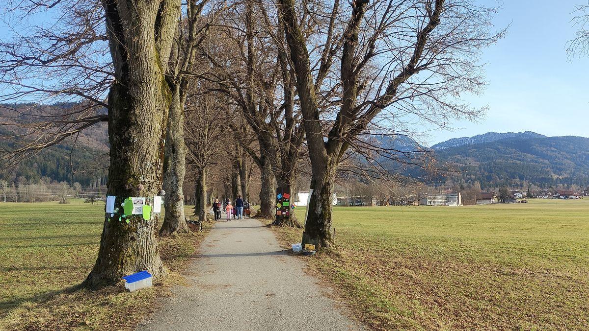 Eine Linden-Allee zwischen den Orten Benediktbeuern und Bichl, im Hintergrund die Berge Herzogstand und Heimgarten. Die vorderen Bäume sind bereits mit bunten Zetteln geschmückt. Im Mittelgrund gehen mehrere Menschen auf dem Weg spazieren.