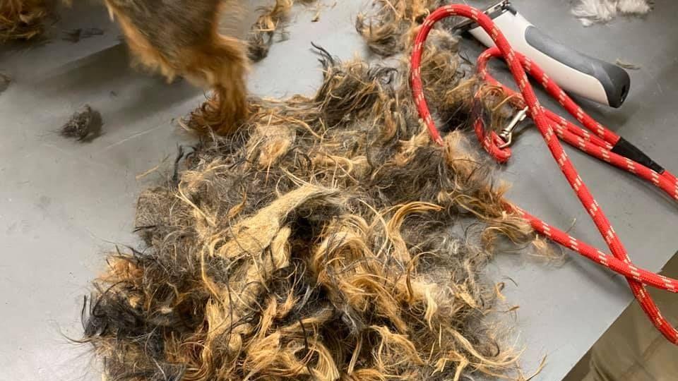 Tierschützer retten verwahrloste Katzen und Hunde