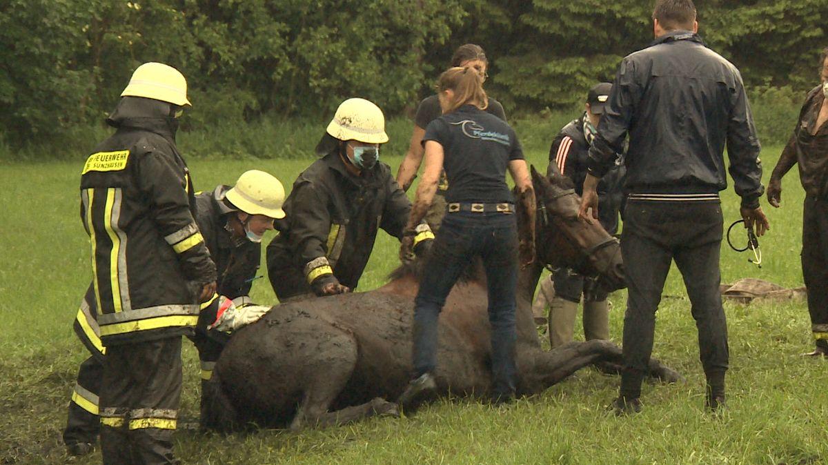 Am Sonntagnachmittag haben die Feuerwehren Freising und Sünzhausen ein Pferd aus einem Wassergraben im Freisinger Moos gerettet.