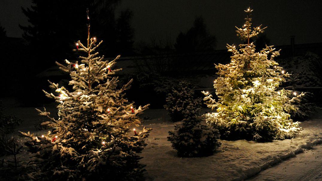 Zwei Weihnachtsbäume im verschneiten Garten