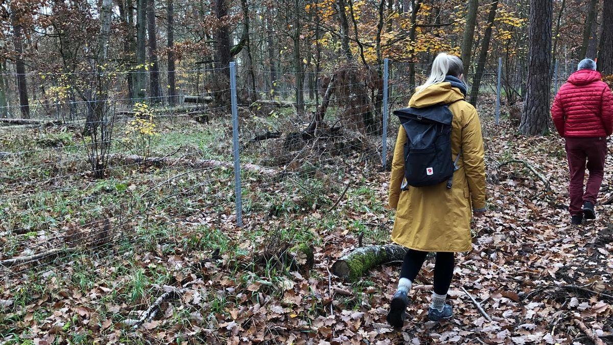 Die Waldläufer suchen den Zaun nach Löchern ab, um die eingezäunten jungen Bäume vor Verbiss zu schützen.