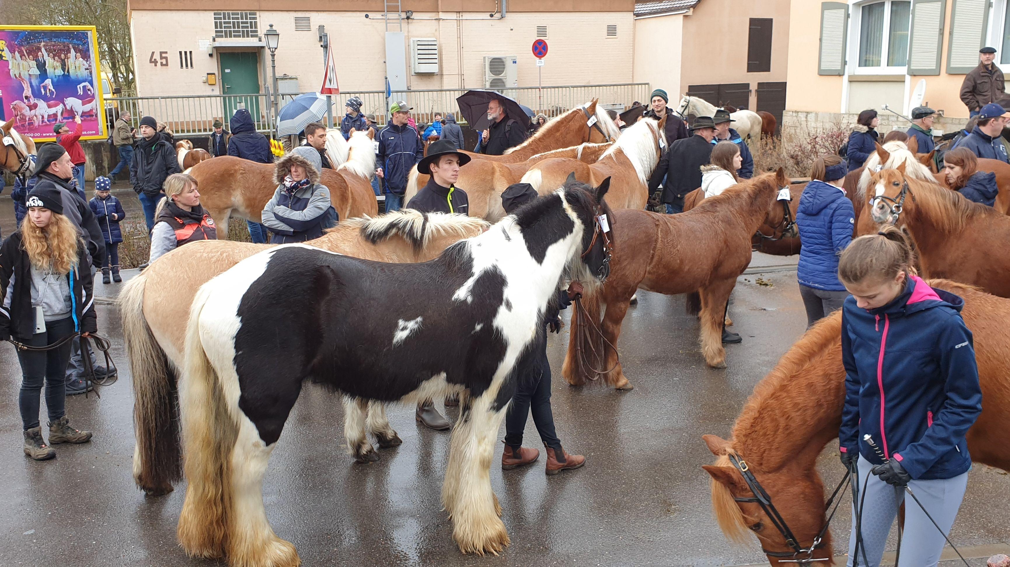 Creglingen feiert seinen 100. Pferdemarkt