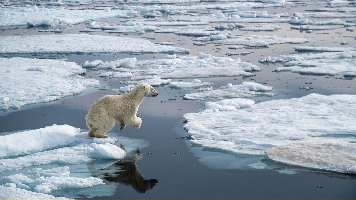 Ein Eisbär springt in der Arktis von Scholle zu Scholle.