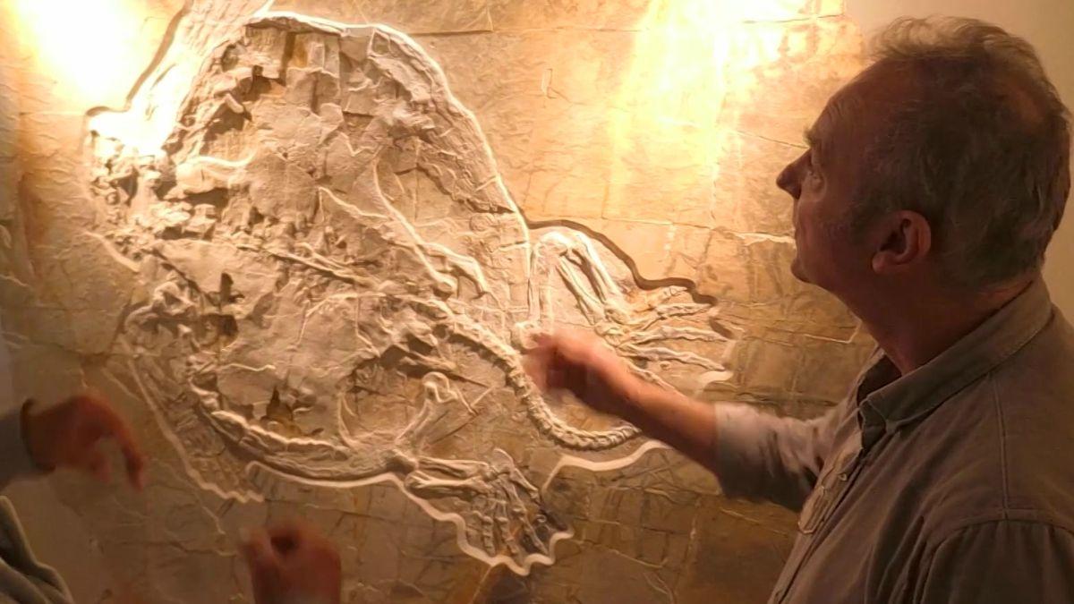 Ein Mann begutachtet das Fossil einer Riesenschildkröte.
