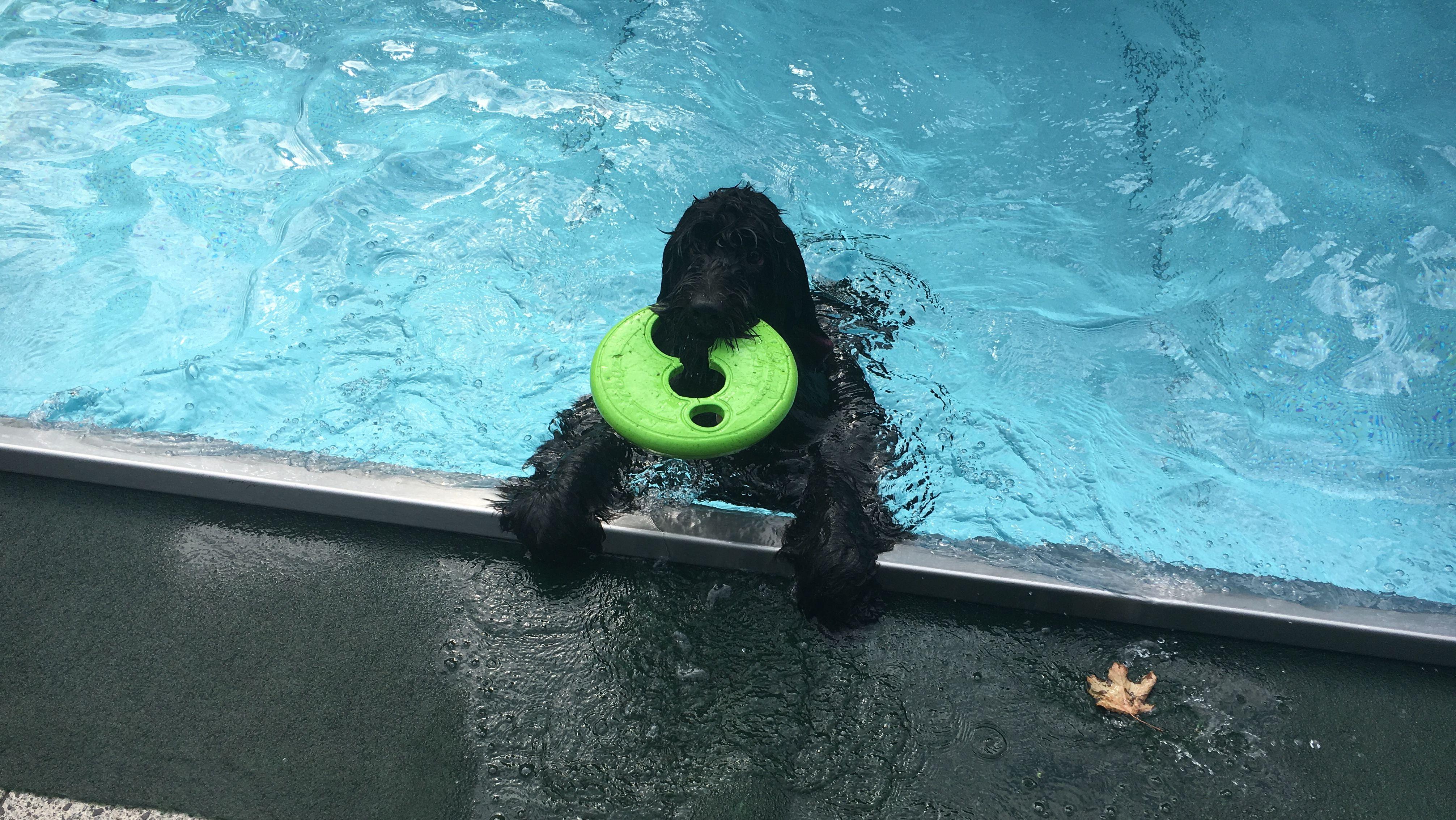 Hund mit Frisbee-Scheibe im Maul im Becken.