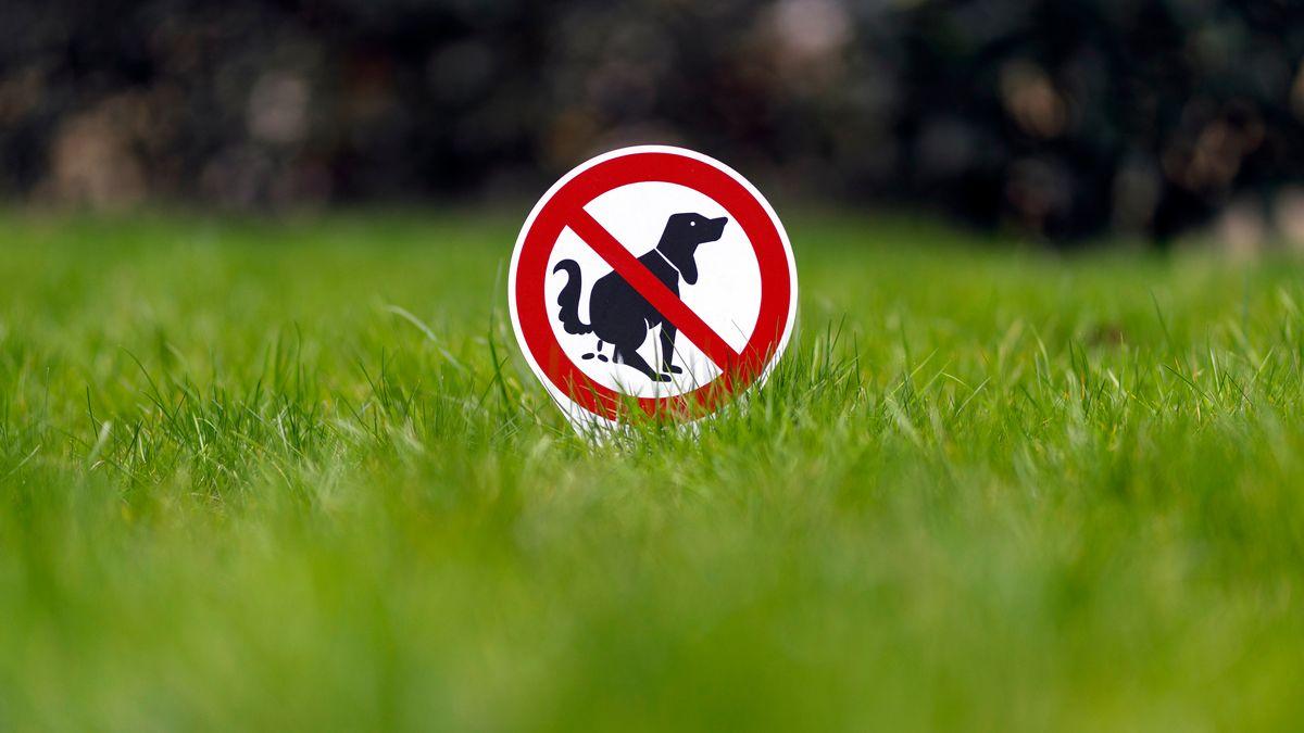 Ein Verbotsschild 'Hier kein Hundeklo' steckt in einem Vorgarten (Symbolbild).