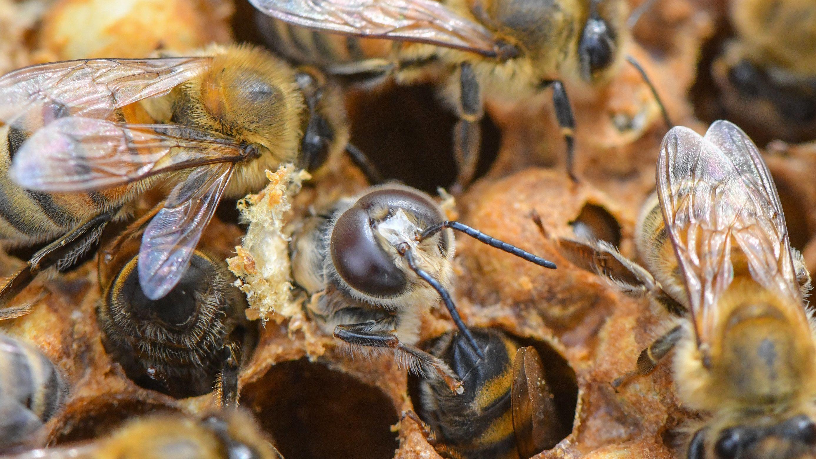 Zum Weltbienentag: Bienen