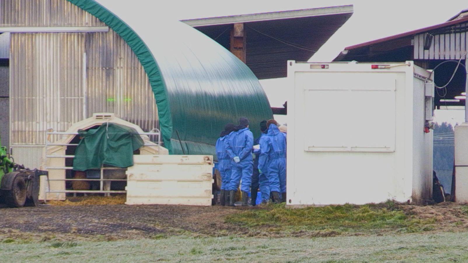 Tierschutzkontrolle in einem Rinderbetrieb in Dietmannsried