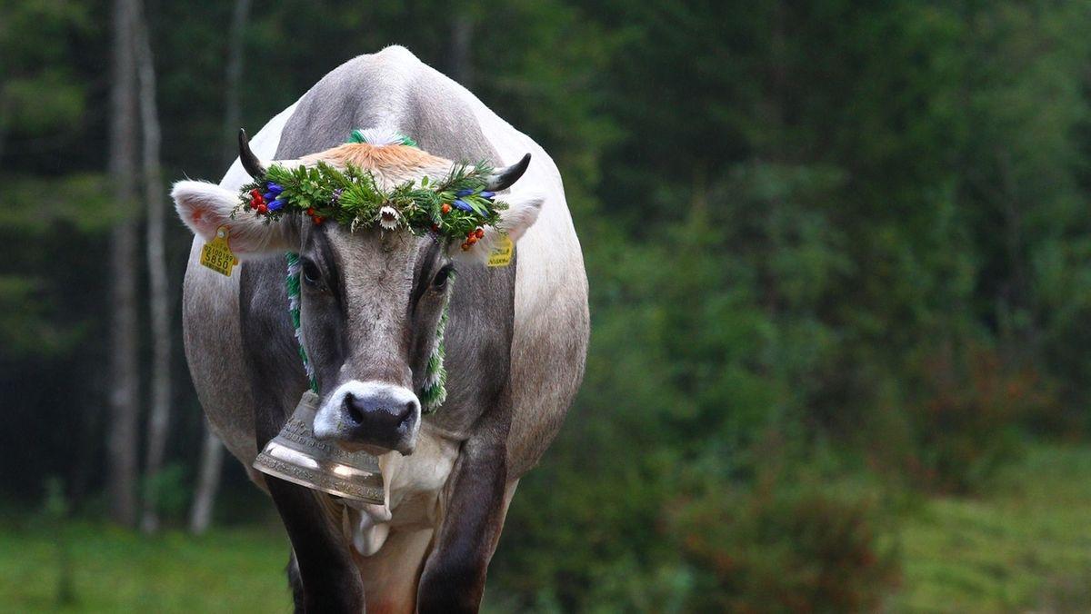 Einsamer Viehscheid im Corona-Sommer.