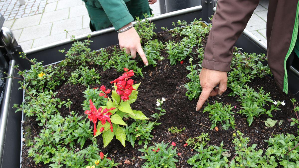 Mitarbeiter des Garten-  und Friedhosamtes der Stadt Memmingen zeigen auf Löcher in einem Blumentrog