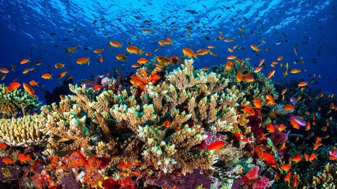 Korallenriff Great Barrier Reef, Australien