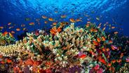 Korallenriff Great Barrier Reef, Australien | Bild:picture-alliance/dpa