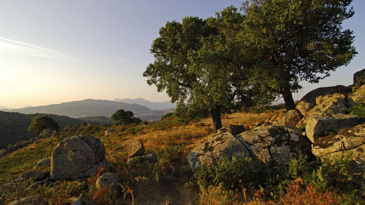 Bäume, Wiesen und Felsen auf Sardinien