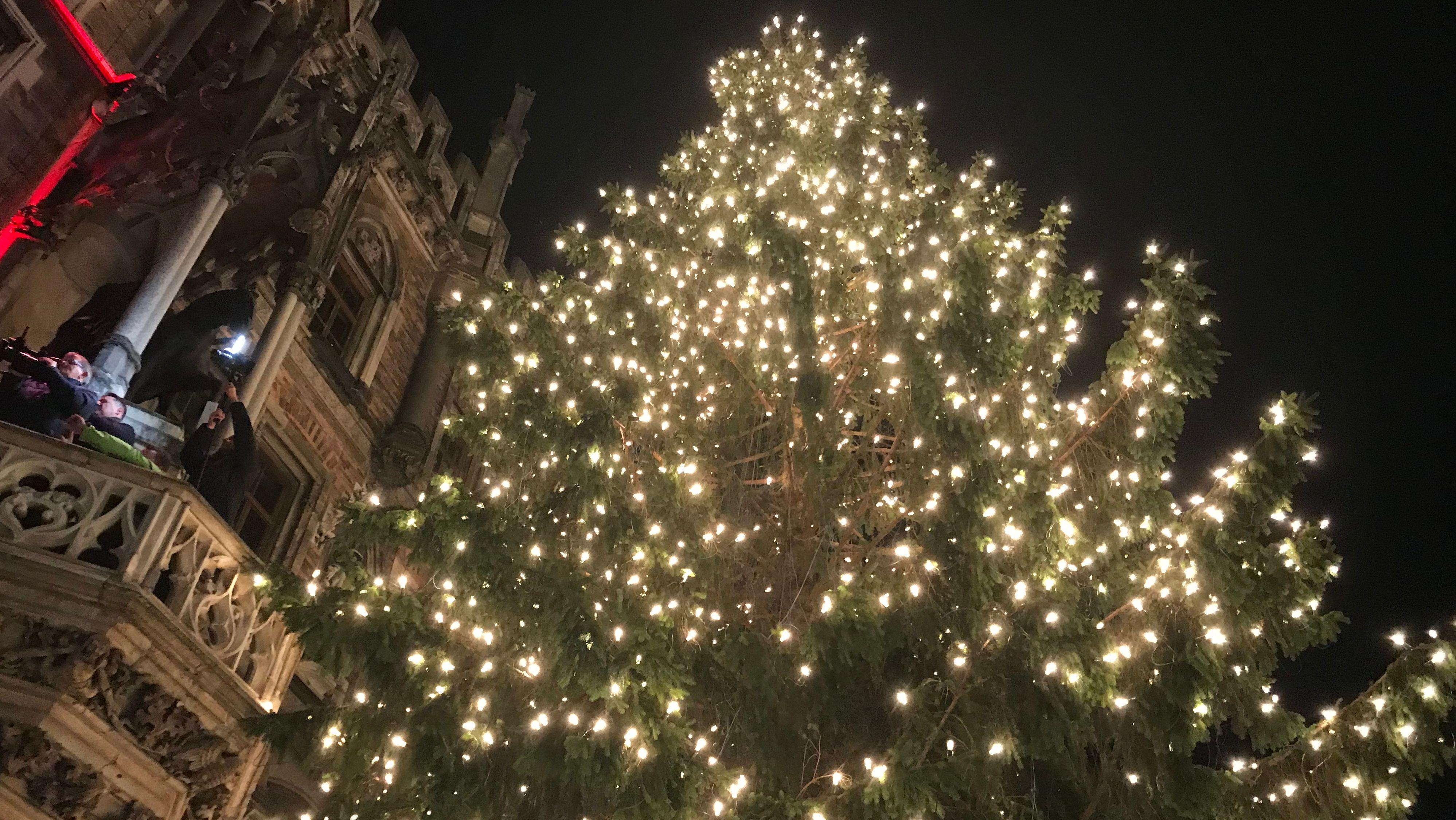 Der Christbaum am Münchner Christkindlmarkt vor dem Rathaus erstrahlt in vollem Glanz. Der Baum stammt aus dem Landkreis Freyung-Grafenau