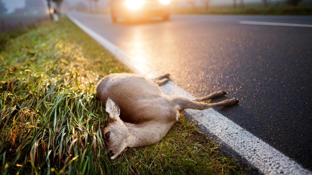 Ein totes Reh liegt nach einem Unfall mit einem PKW am Straßenrand. | Bild:dpa-Bildfunk/Julian Stratenschulte