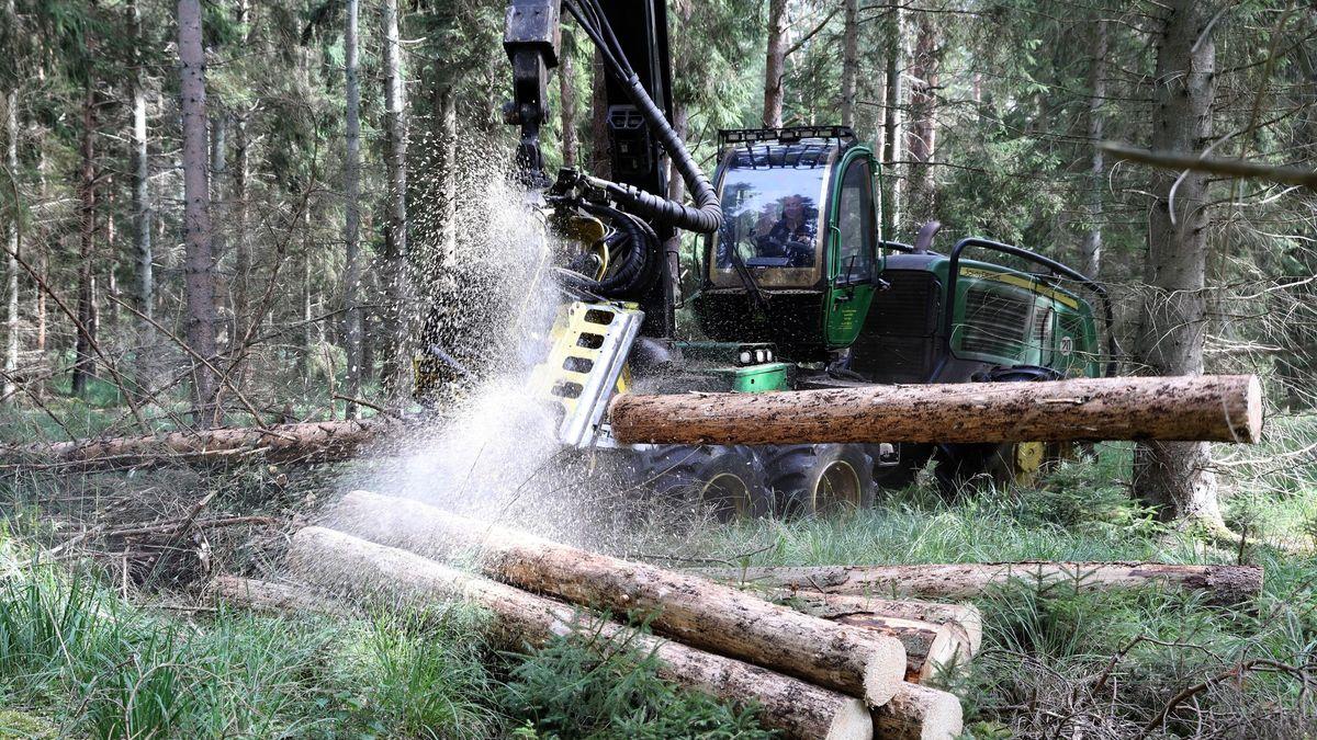 Eine Holzerntemaschine zerschneidet einen Baumstamm im Wald.
