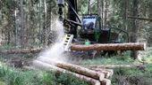 Eine Holzerntemaschine zerschneidet einen Baumstamm im Wald. | Bild:Bernd Wüstneck/dpa-Zentralbild/dpa
