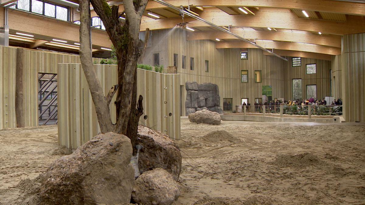 Große Sandfläche mit Felsbrocken und Bäumen.