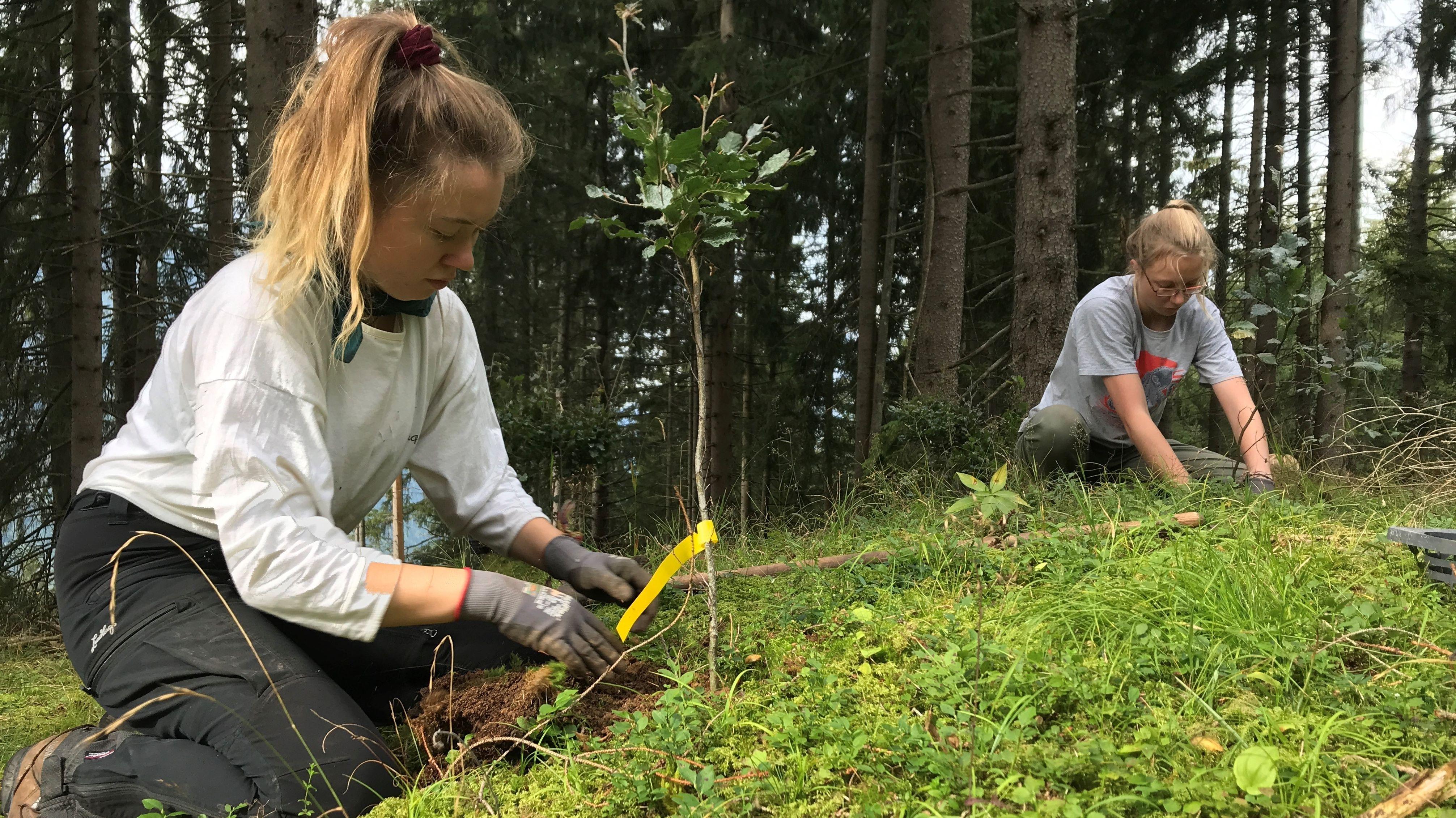 Zwei Jugendliche pflanzen Bäume