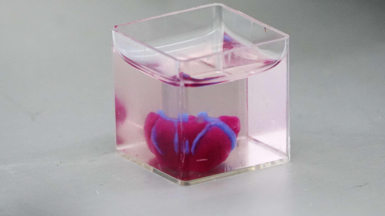 Israelische Forscher haben mit einem 3D-Drucker ein Mini-Herz aus menschlichem Gewebe erzeugt.