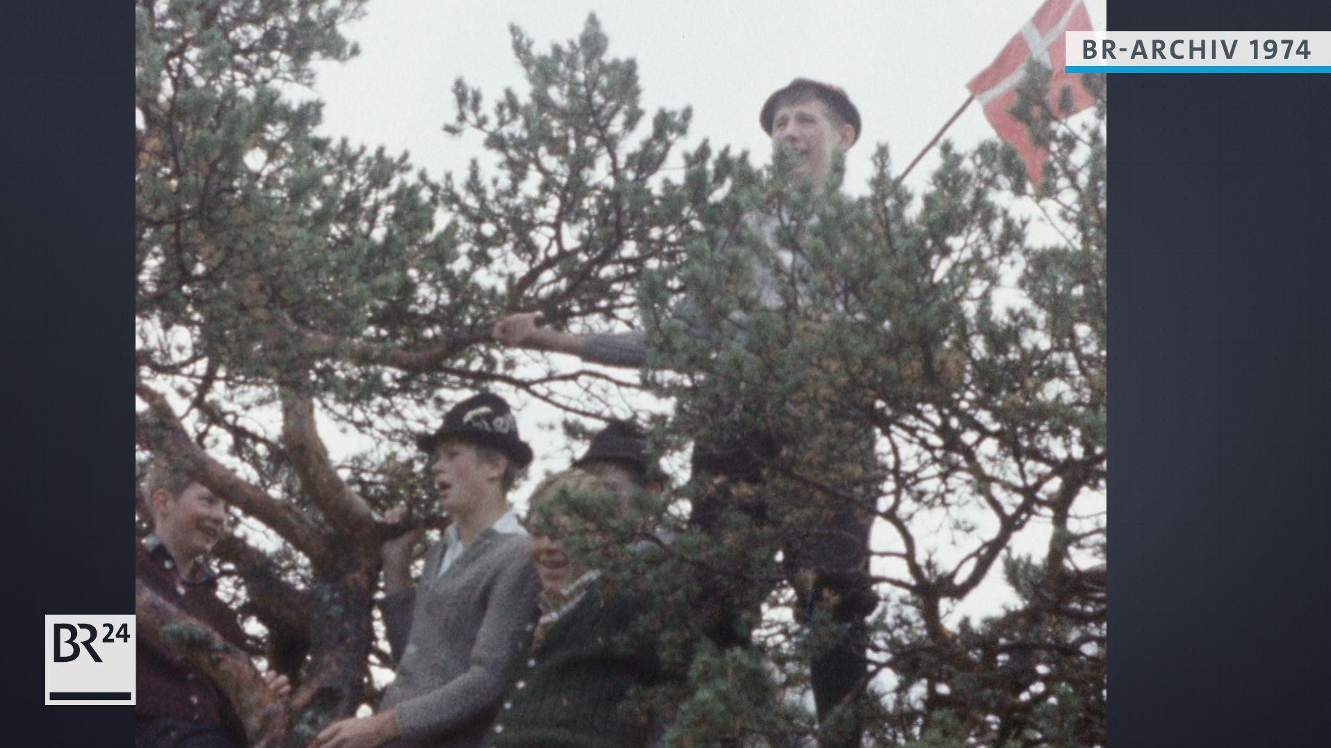Jungen stehen auf einem Baum