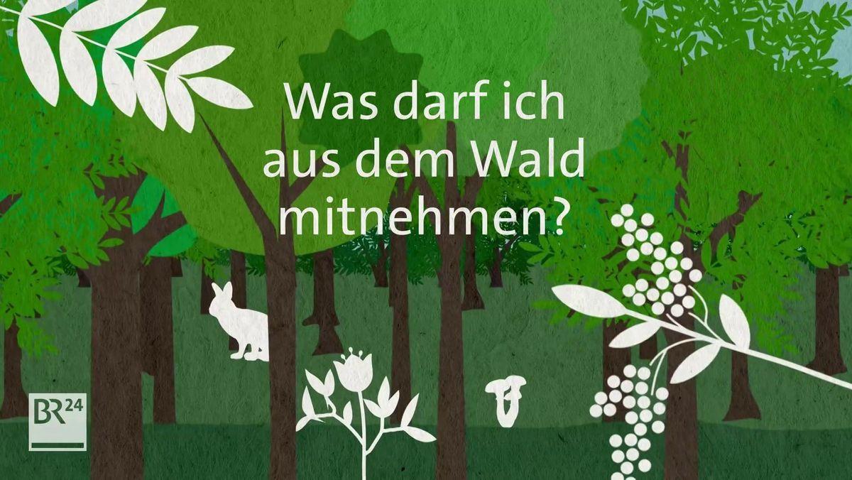 Was darf ich aus dem Wald mitnehmen?