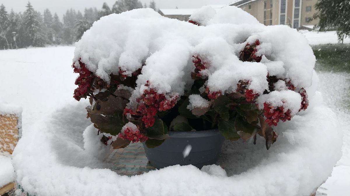 Schneebedeckte Blumenschale