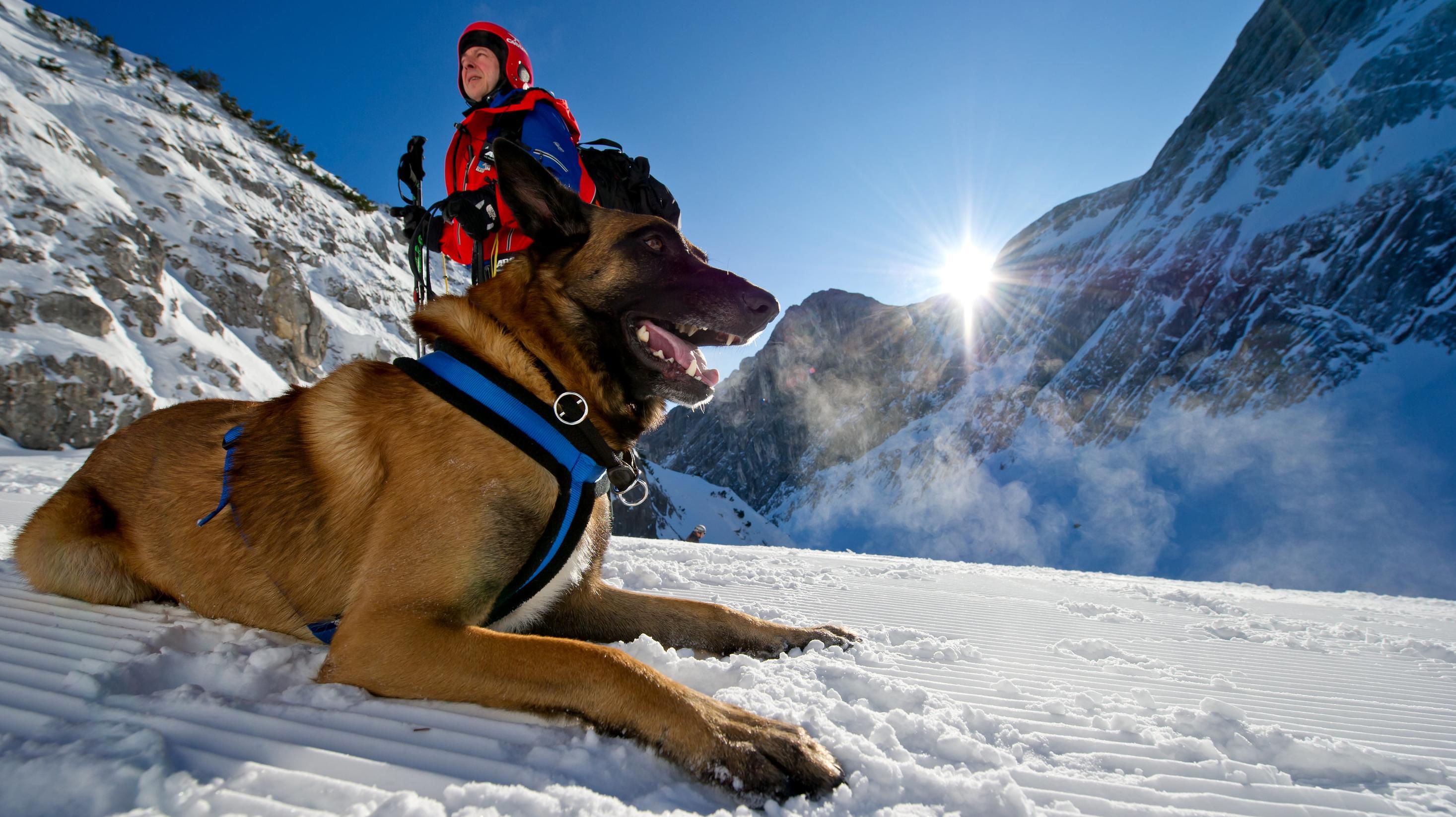 Lawinensuchhund in Bayerischen Alpen
