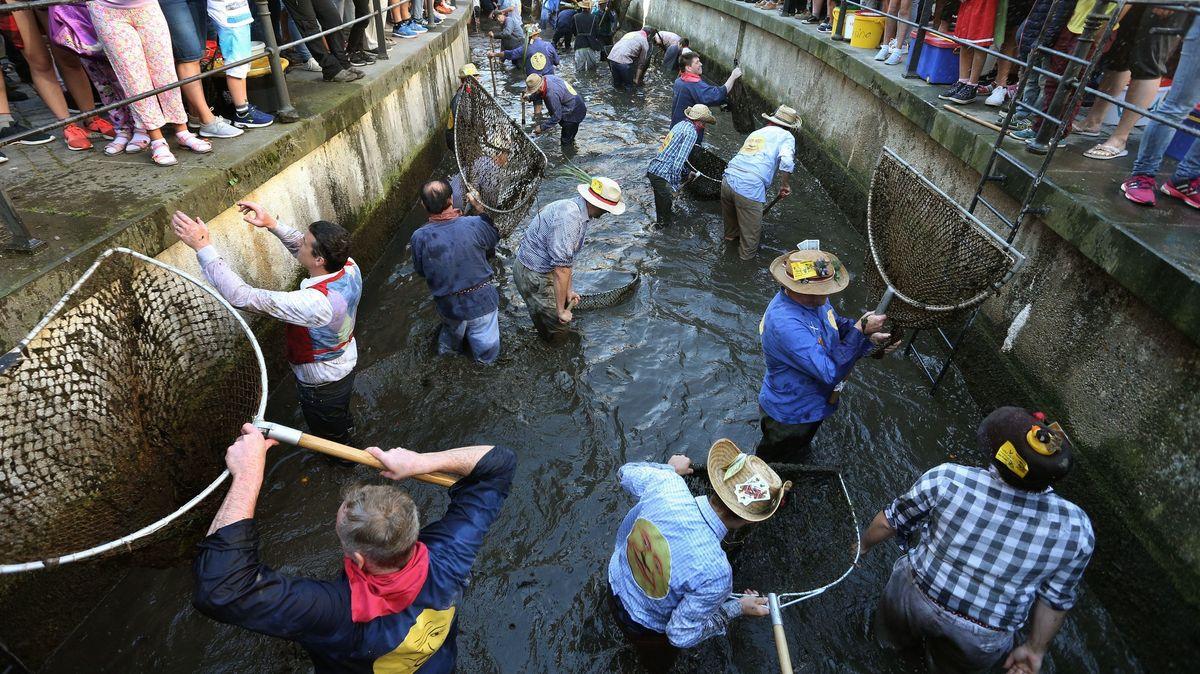 """Beim historischen Fischertag in Memmingen stürzen sich die Männer mit Keschern zum Forellenfang in die """"Memminger Ach"""""""