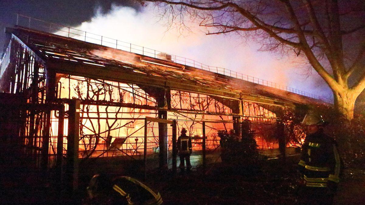 Feuerwehrleute stehen nach Löscharbeiten vor dem Affenhaus im Krefelder Zoo.
