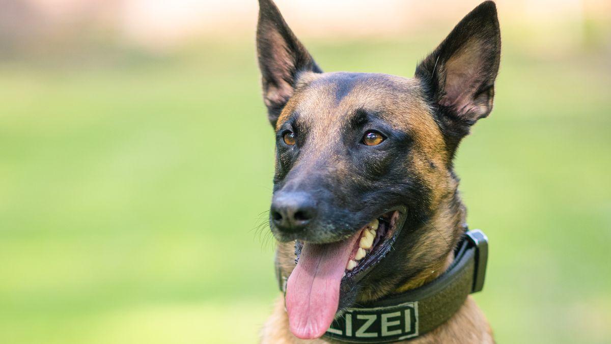 Hund mit Polizei-Halsband