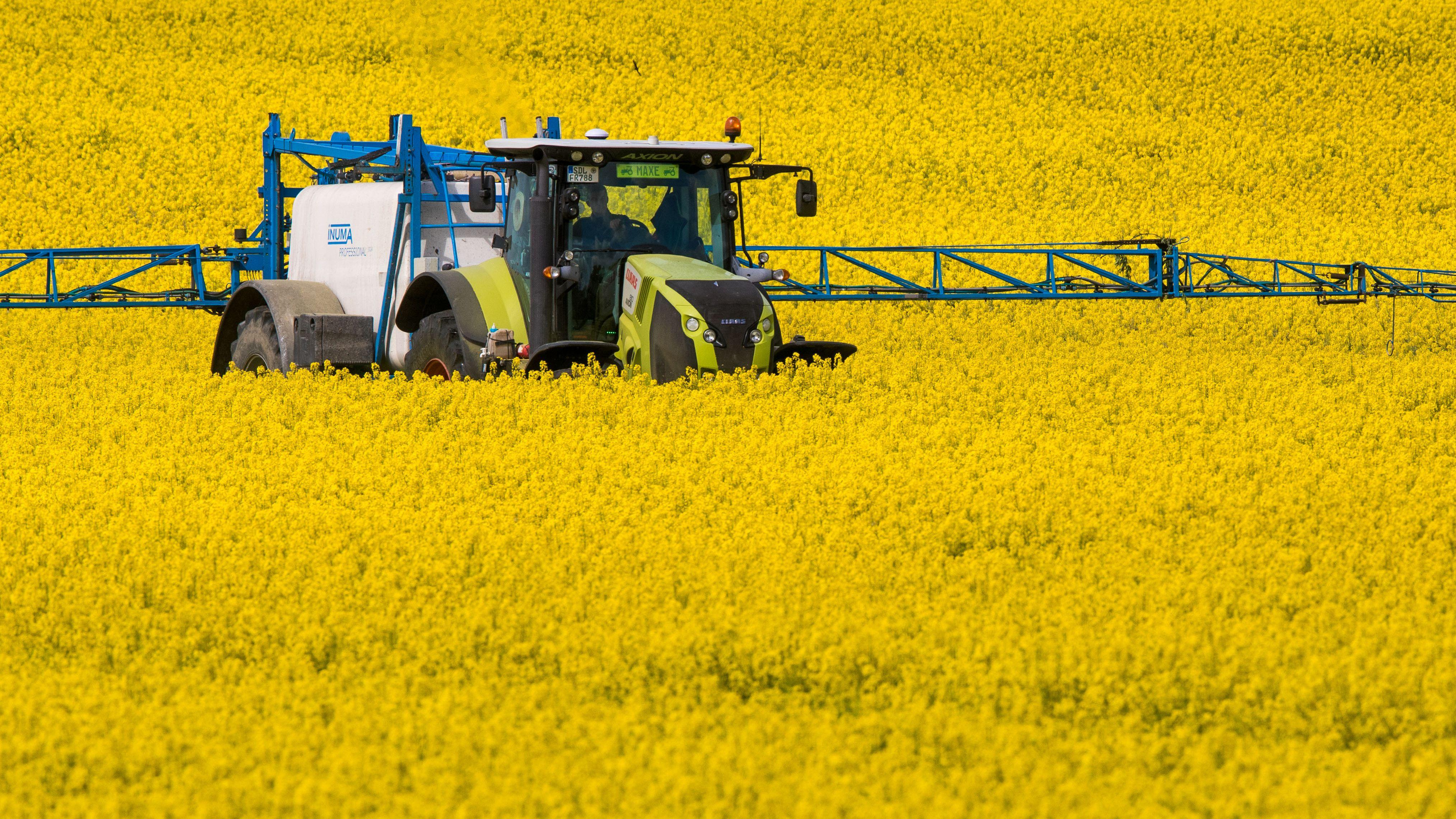 Ein Traktor zieht eine Pflanzenspritze durch ein Rapsfeld