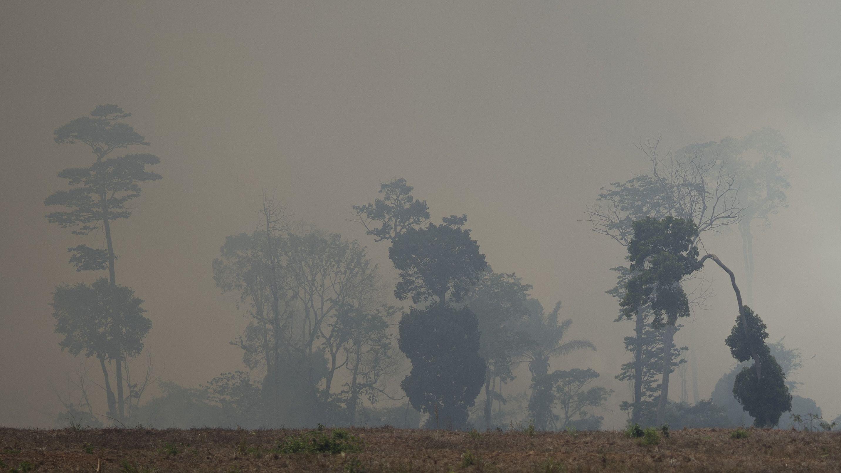 Regenwaldreste in Rauchschwaden