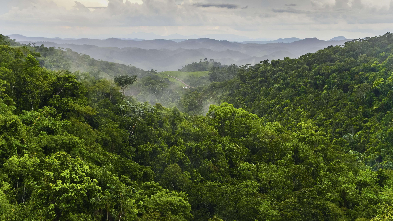 Regenwald im Bundesstaat Minas Gerais in Brasilien, Südamerika