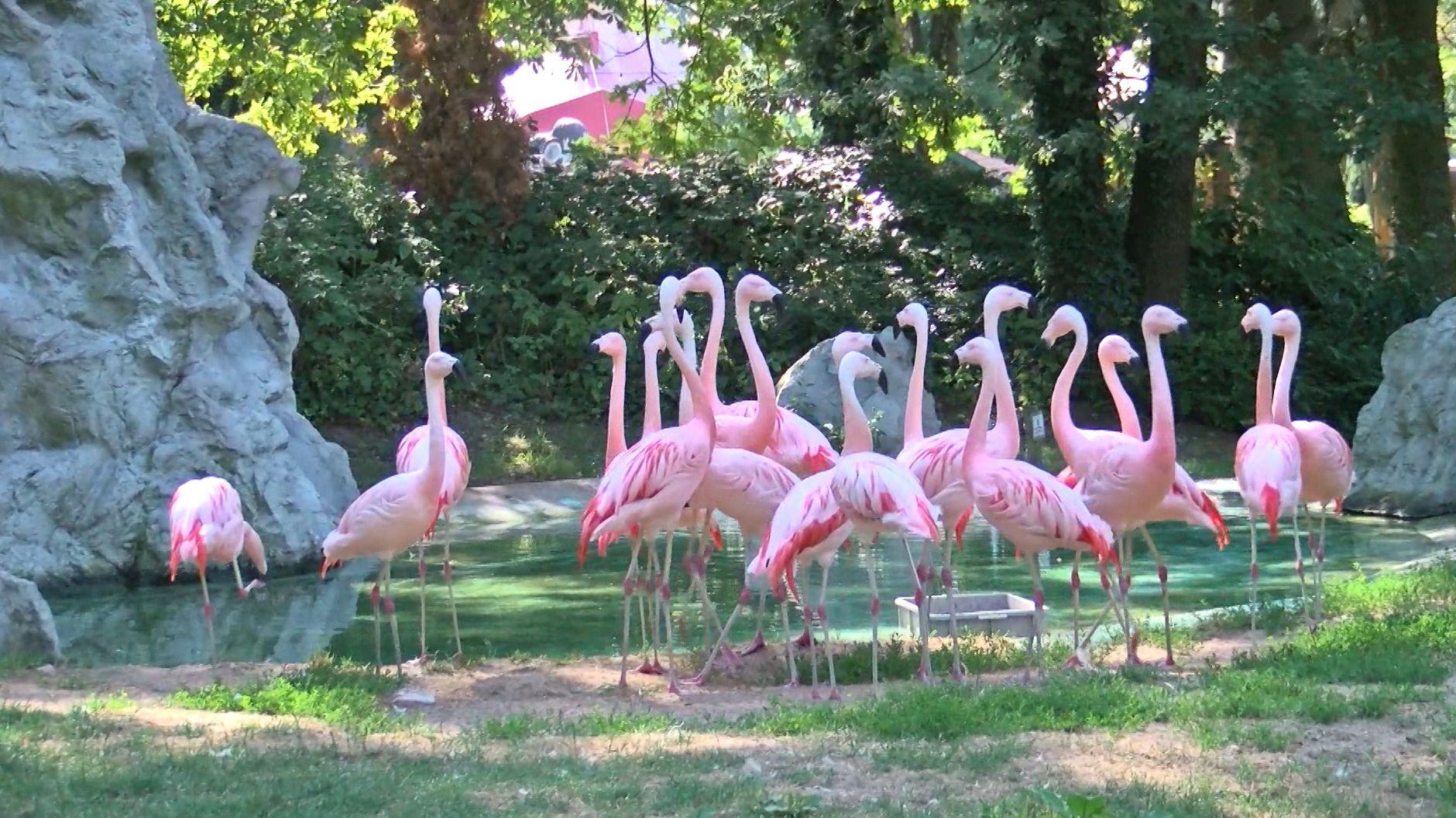 Flamingos im Freizeitland Geiselwind