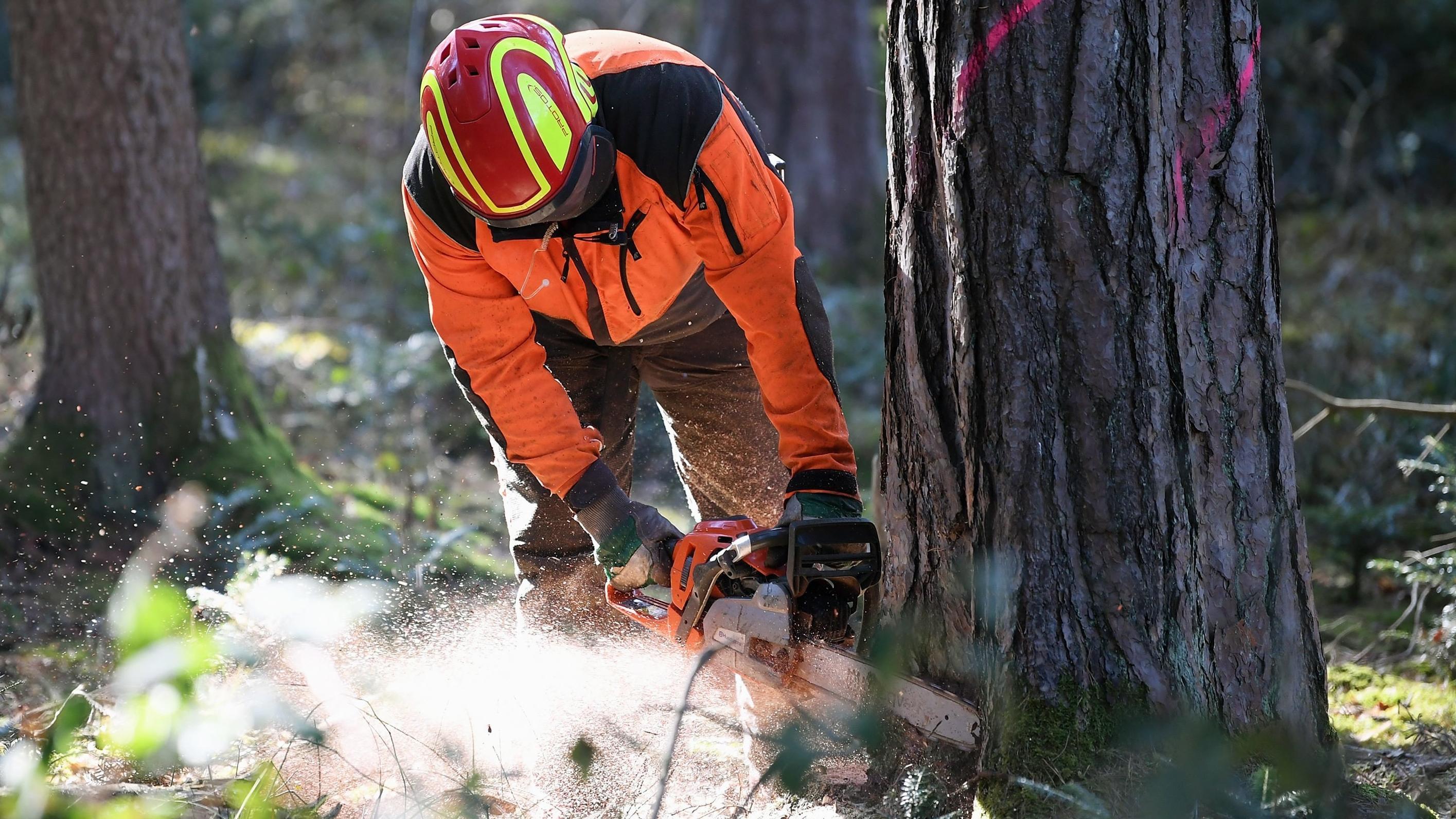 Waldarbeiter fällt mit einer Motorsäge einen Baum
