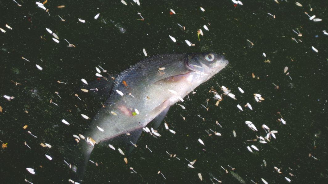 Fischsterben im Altmühlsee (Symbolbild)