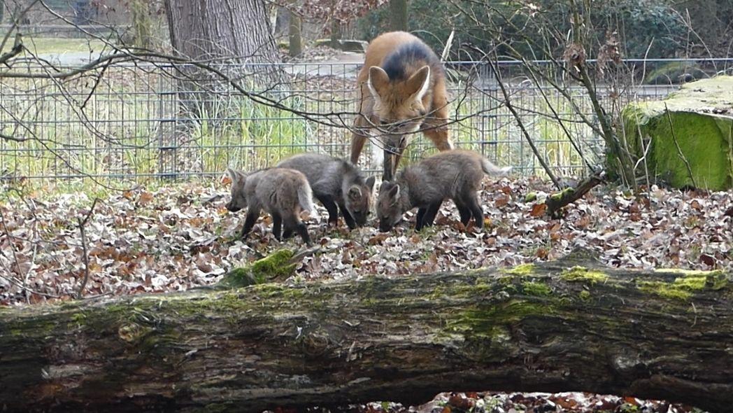 Nachwuchs im Nürnberger Tiergarten