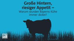 #fragBR24 - Warum wurden Kühe dicker? | Bild:BR