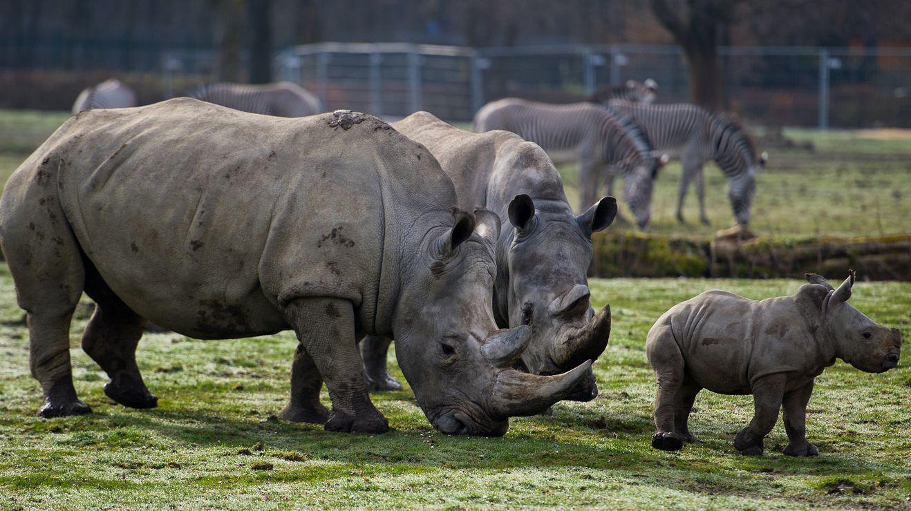 Der Artenschutz-Euro kommt auch Nashörnern in Uganda zugute