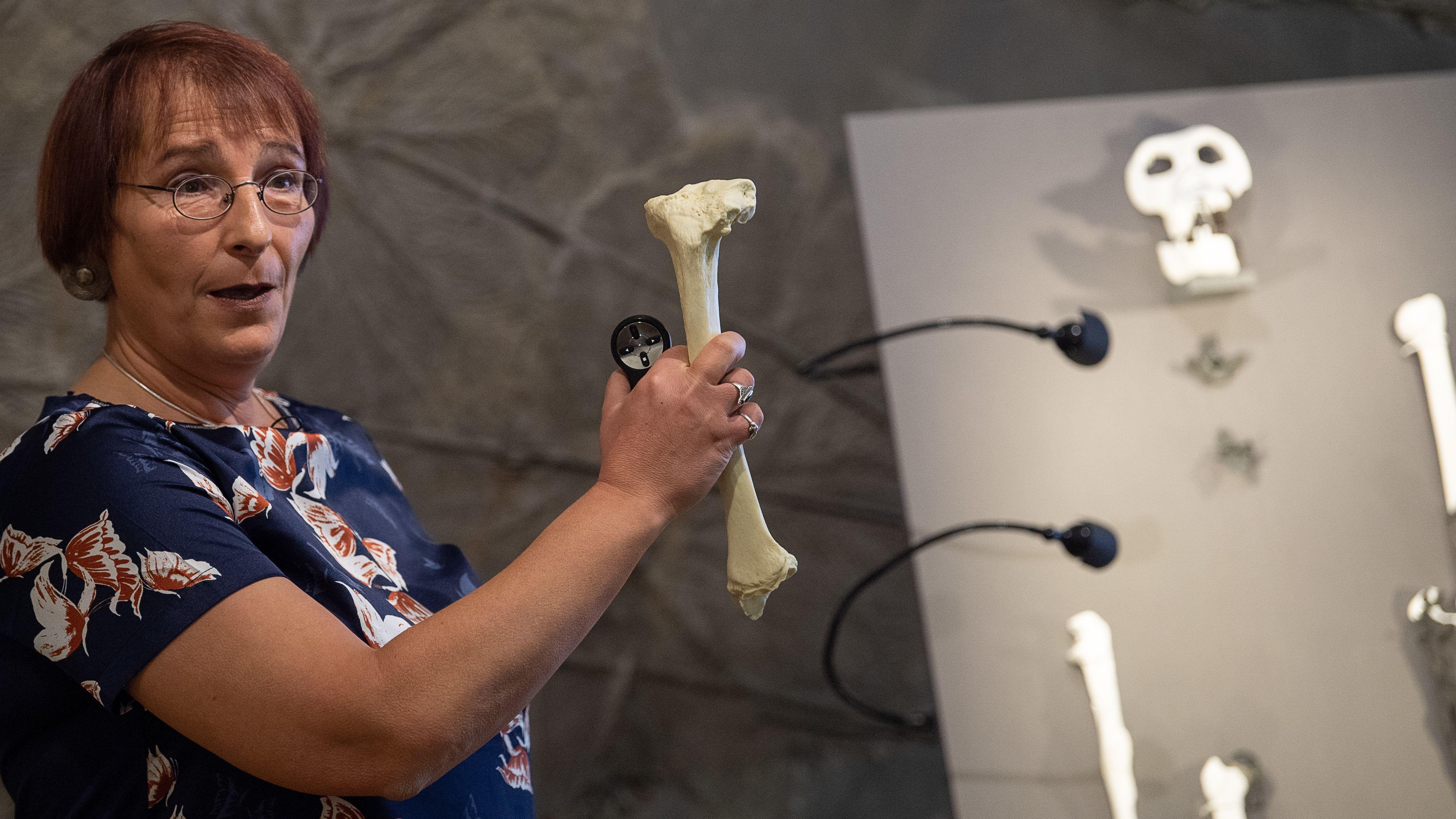 Noch aufschlussreicher war allerdings das Knochengerüst des Menschenaffen - etwa Überreste von Hüft- und Kniegelenken.