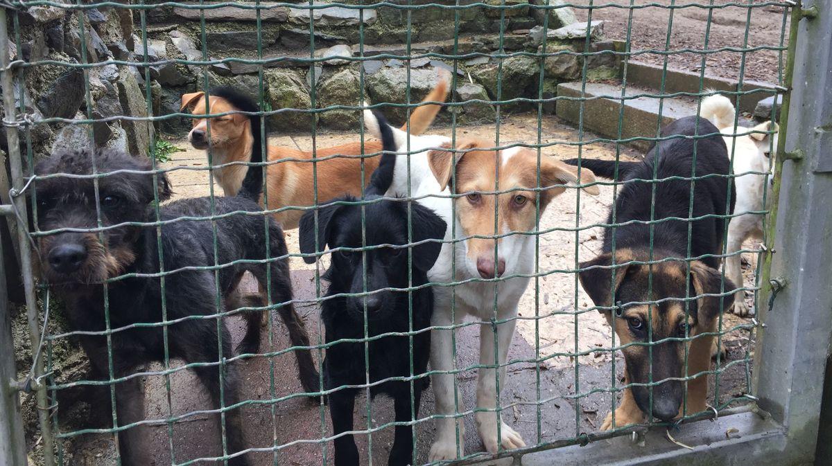 Hunde hinter einem Gitter