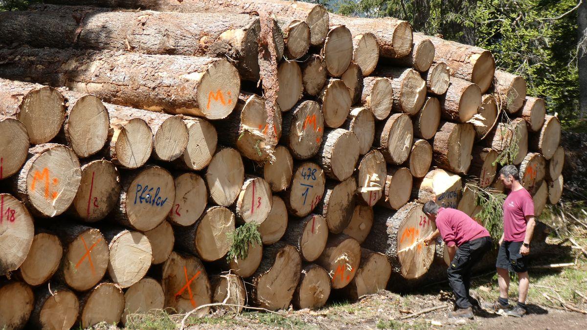 Experten begutachten die beim Föhnsturm umgeknickten Bäume.