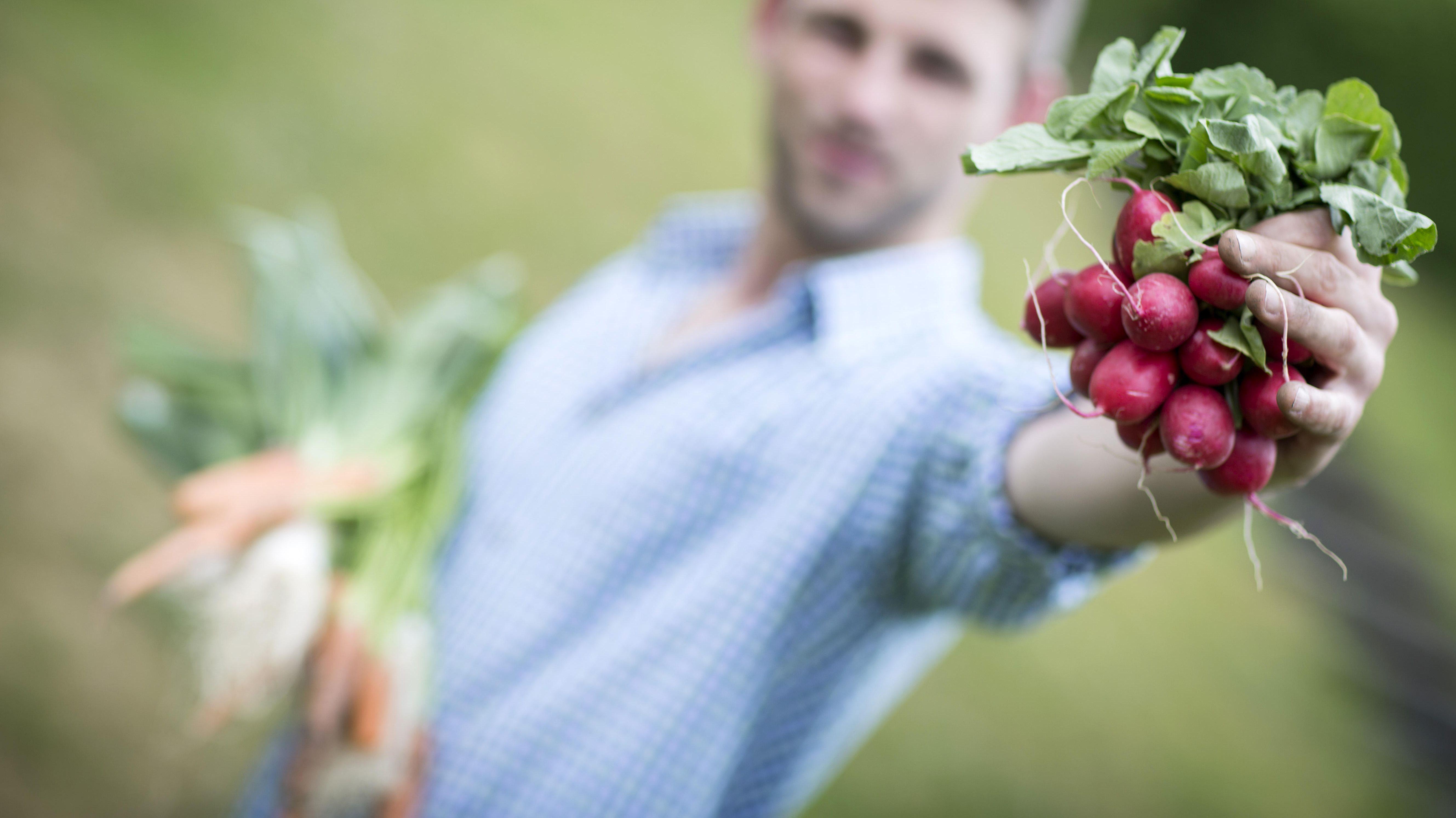 Mann hält Bund Radieschen ins Bild, in der anderen Hand hält er einen Bund Karotten