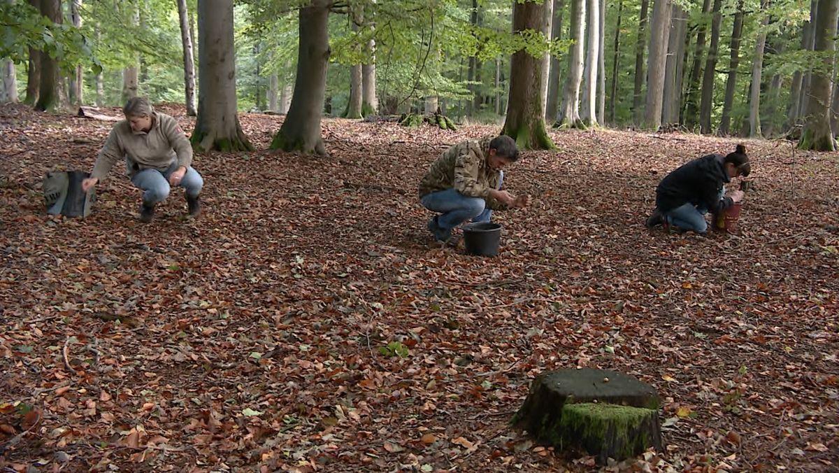 Eichelsammler sind rund um Rothenbuch im Spessart unterwegs