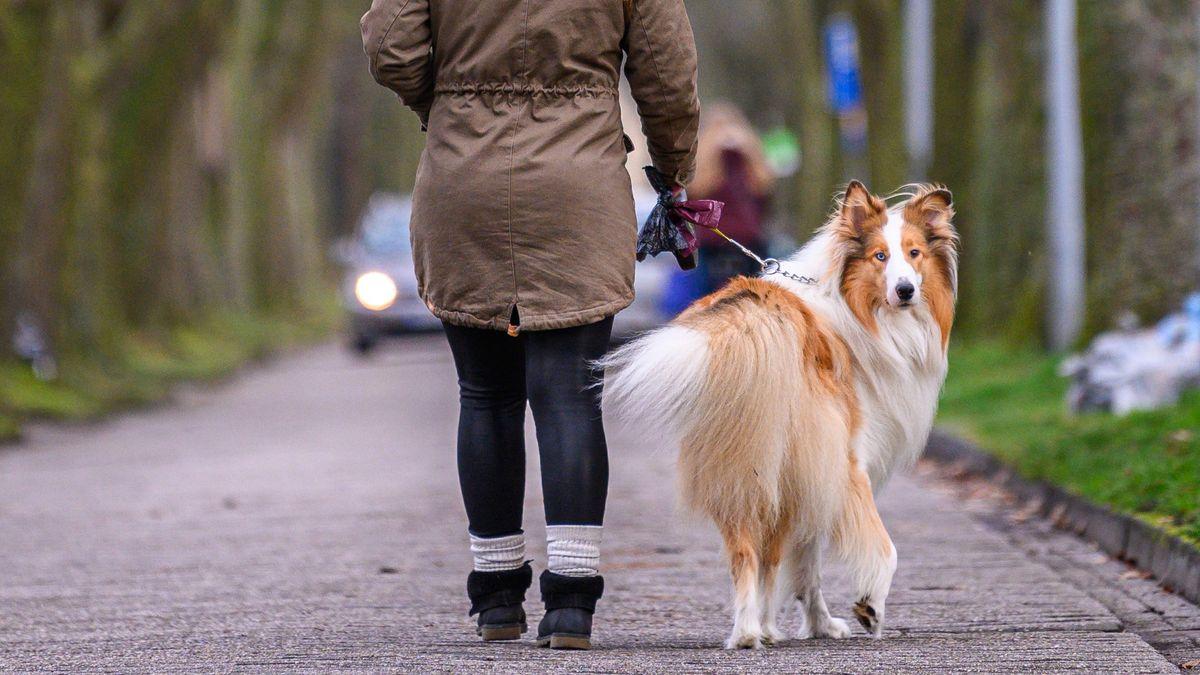 Frau geht mit Hund spazieren.