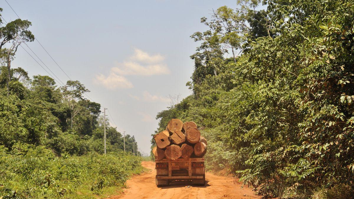 Die Ladefläche eines LKW mit Baumstämmen.