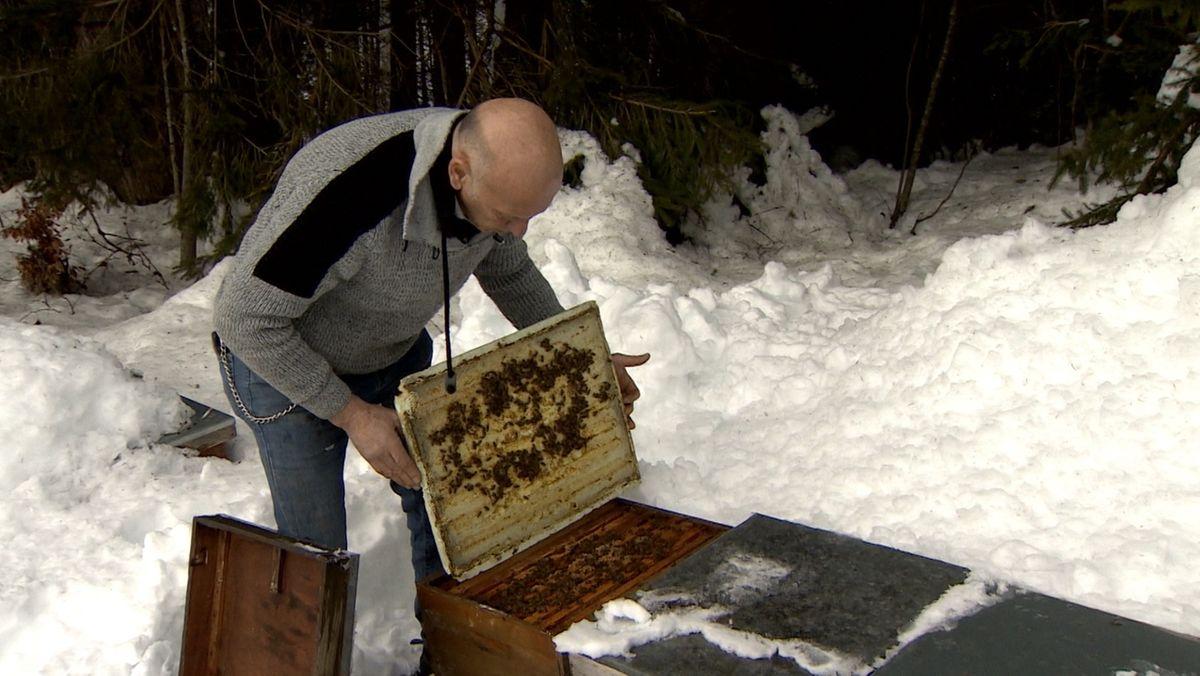 Imker Rainer Krüger an einem geöffneten Bienenstock
