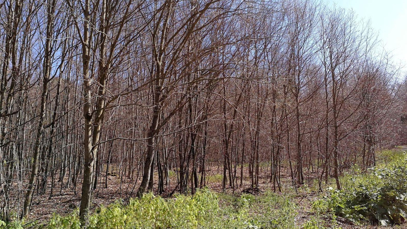 Geschädigter Wald bei Hettstadt
